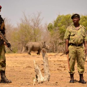 standing between the rhino and the poacher
