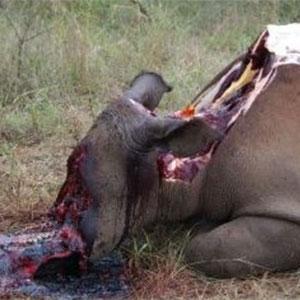 rhino-horror
